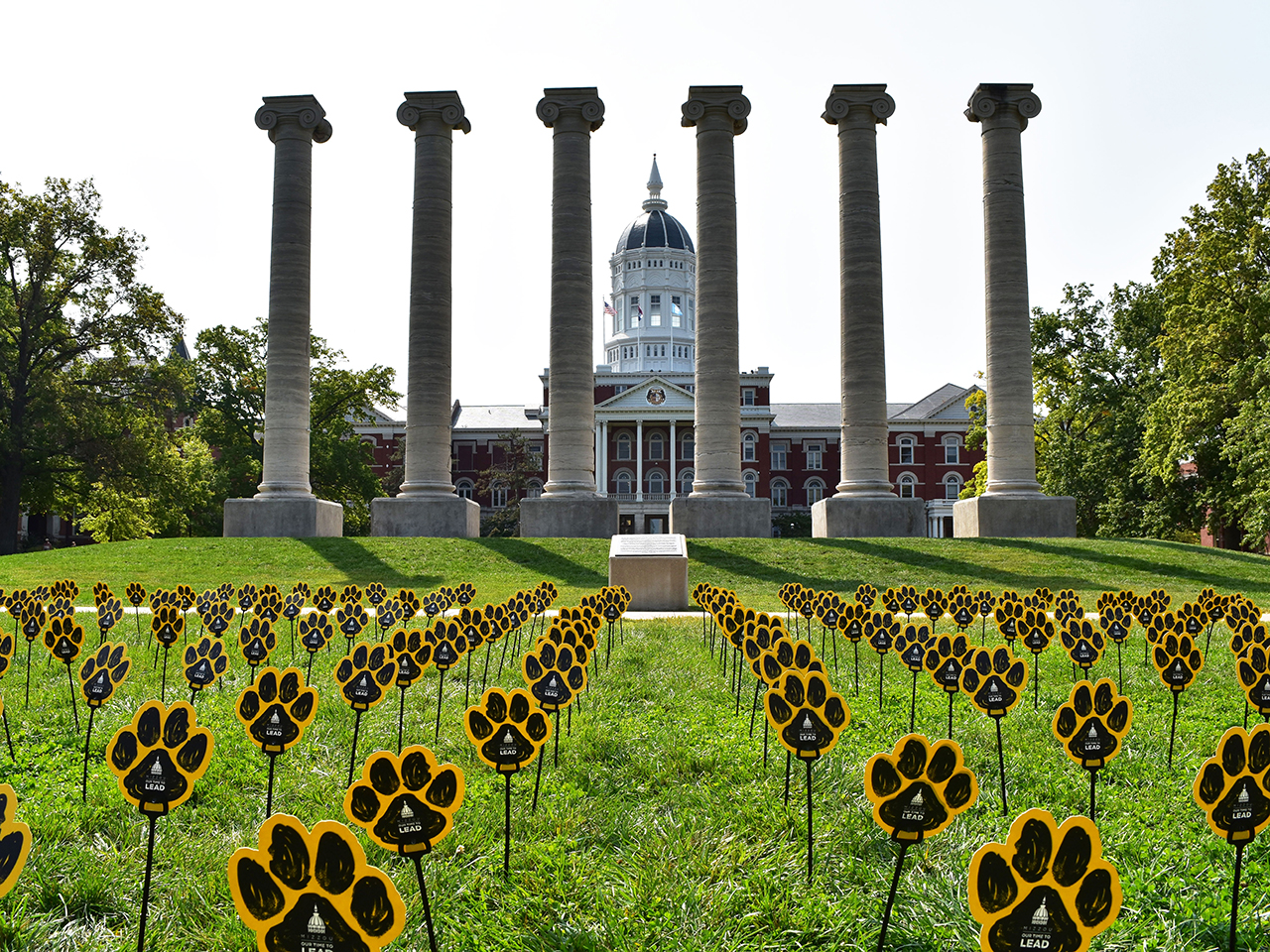 This is an image of Jesse Hall with the six columns and Tiger paws all over the grass, right in front of the columns.